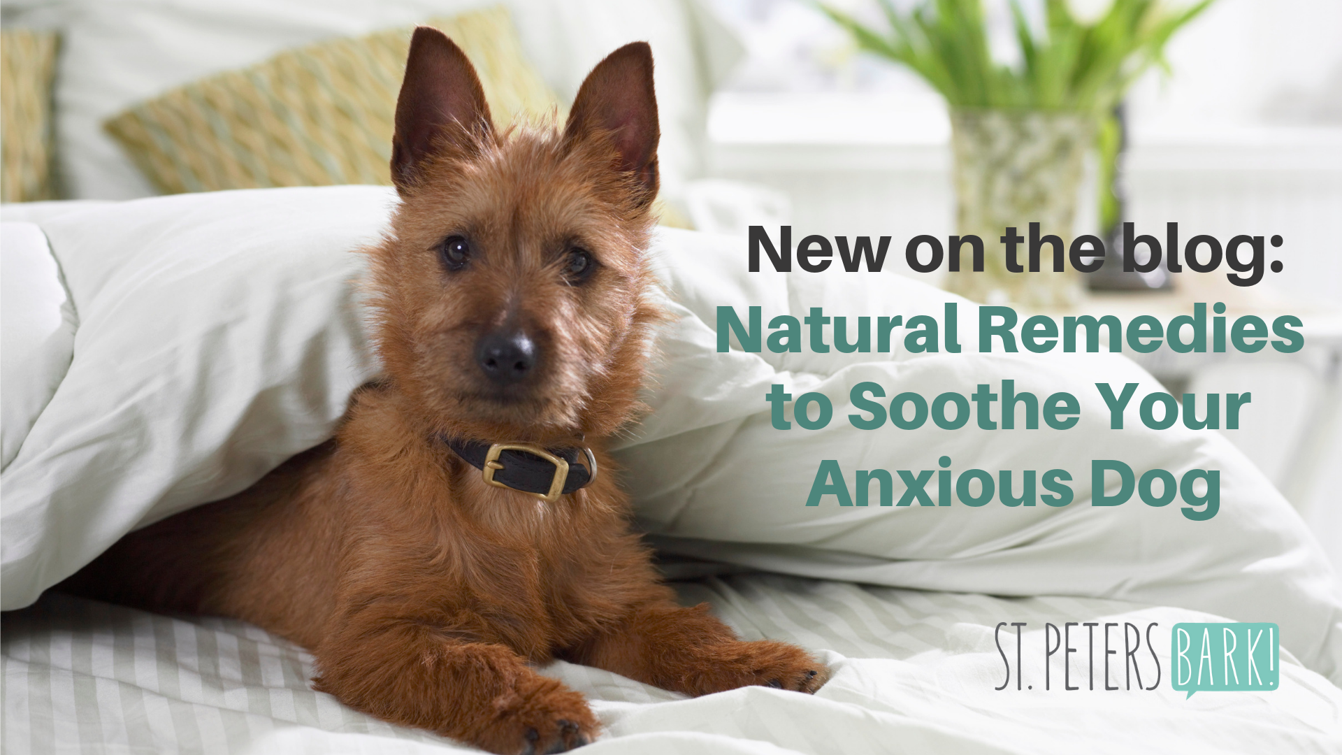 Natural Remedies to Soothe Your Anxious Dog