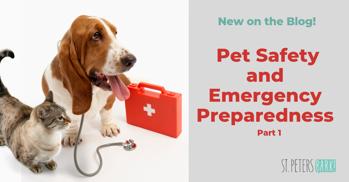 Pet Safety & Emergency Preparedness: Part 1