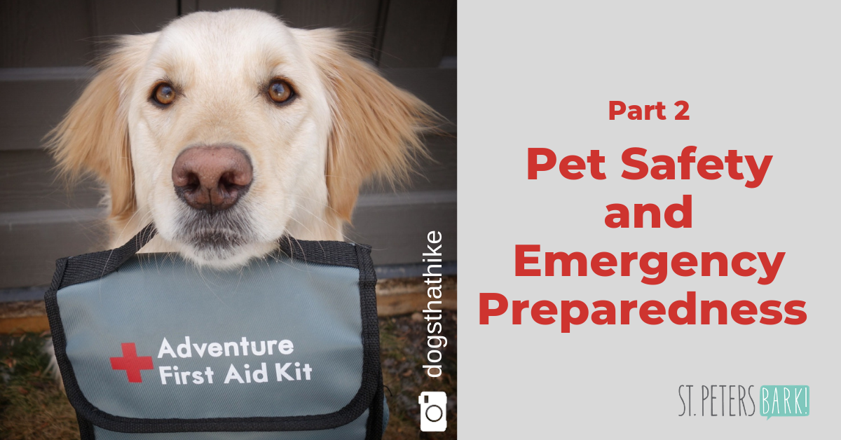 Preparing your Pet's First Aid Kit – Part 2