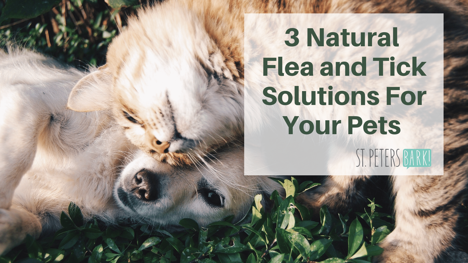 3 Natural Flea & Tick Solutions For Your Pets