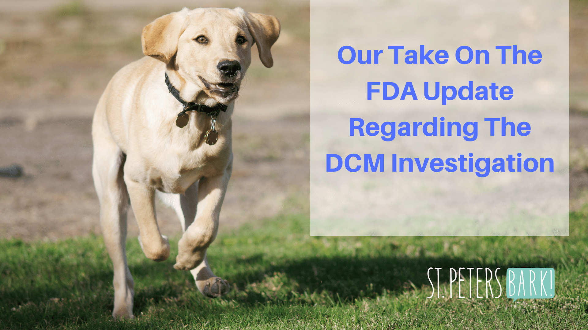 Our Take on the FDA Update regarding the DCM Investigation