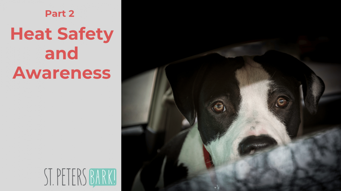 Heat Safety & Awareness: Keeping Your Pets Safe From Heat Stroke (part 2)