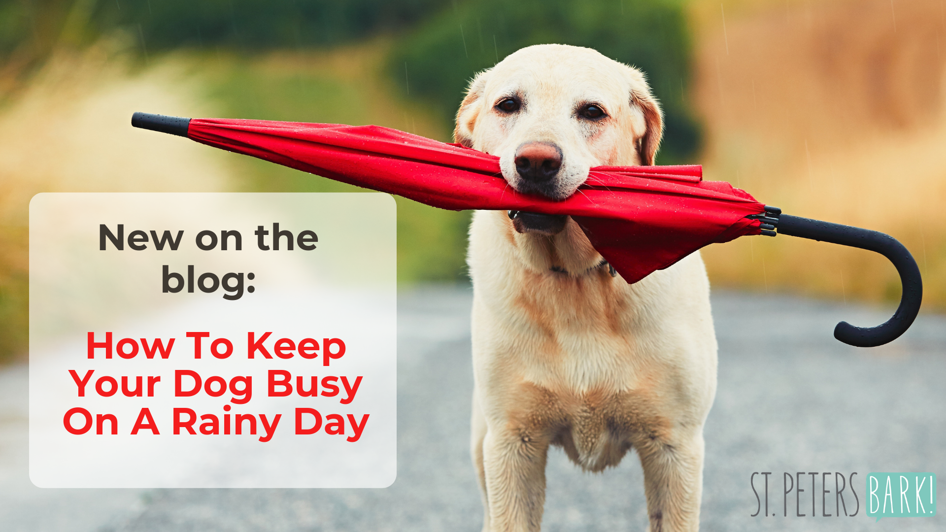 How To Keep Your Dog Busy On A Rainy Day: 4 Trainer Approved Tips