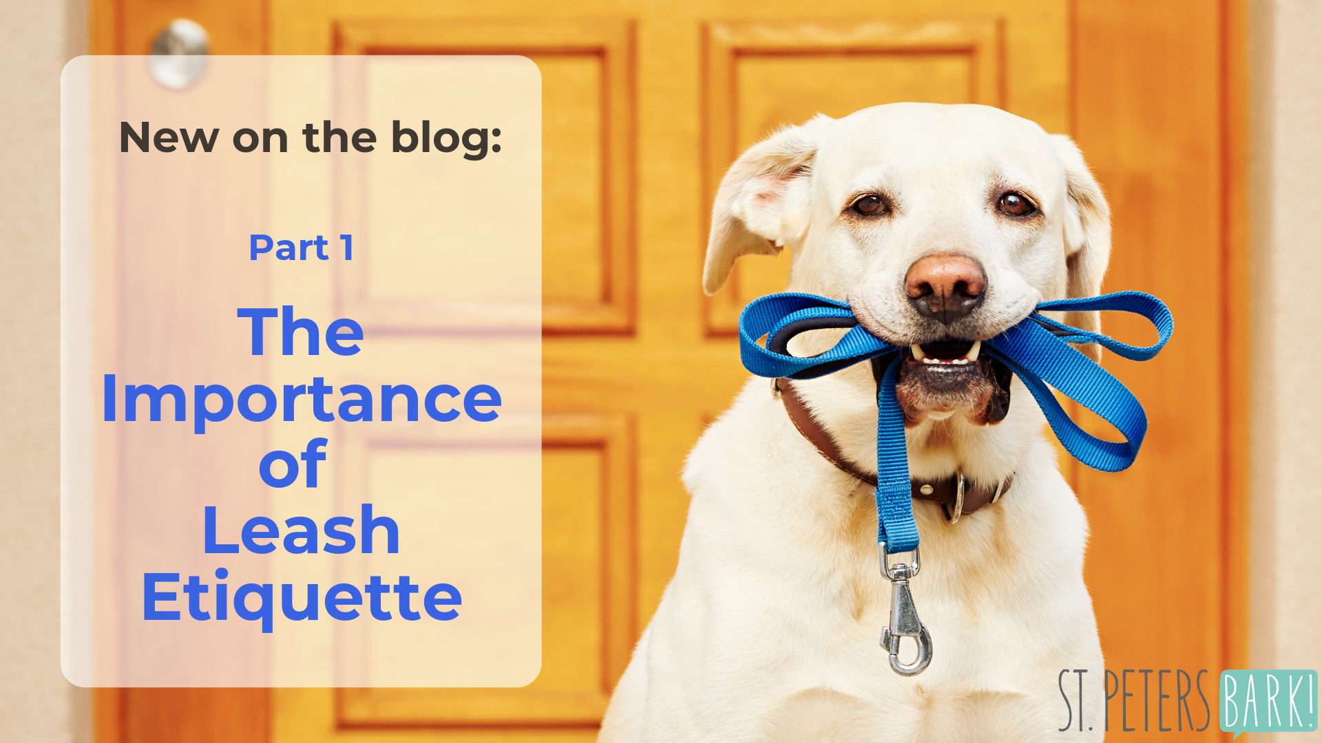 Dogs 101: The Importance Of Leash Etiquette