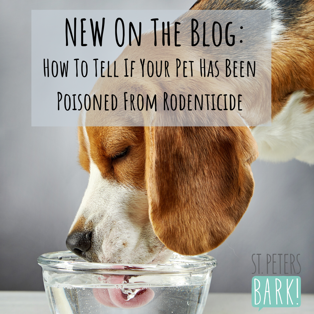 How To Tell If Your Pet Has Been Poisoned From Rodenticide