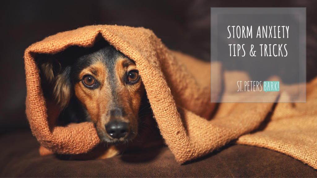 st petersbark storm anxiety tips & tricks