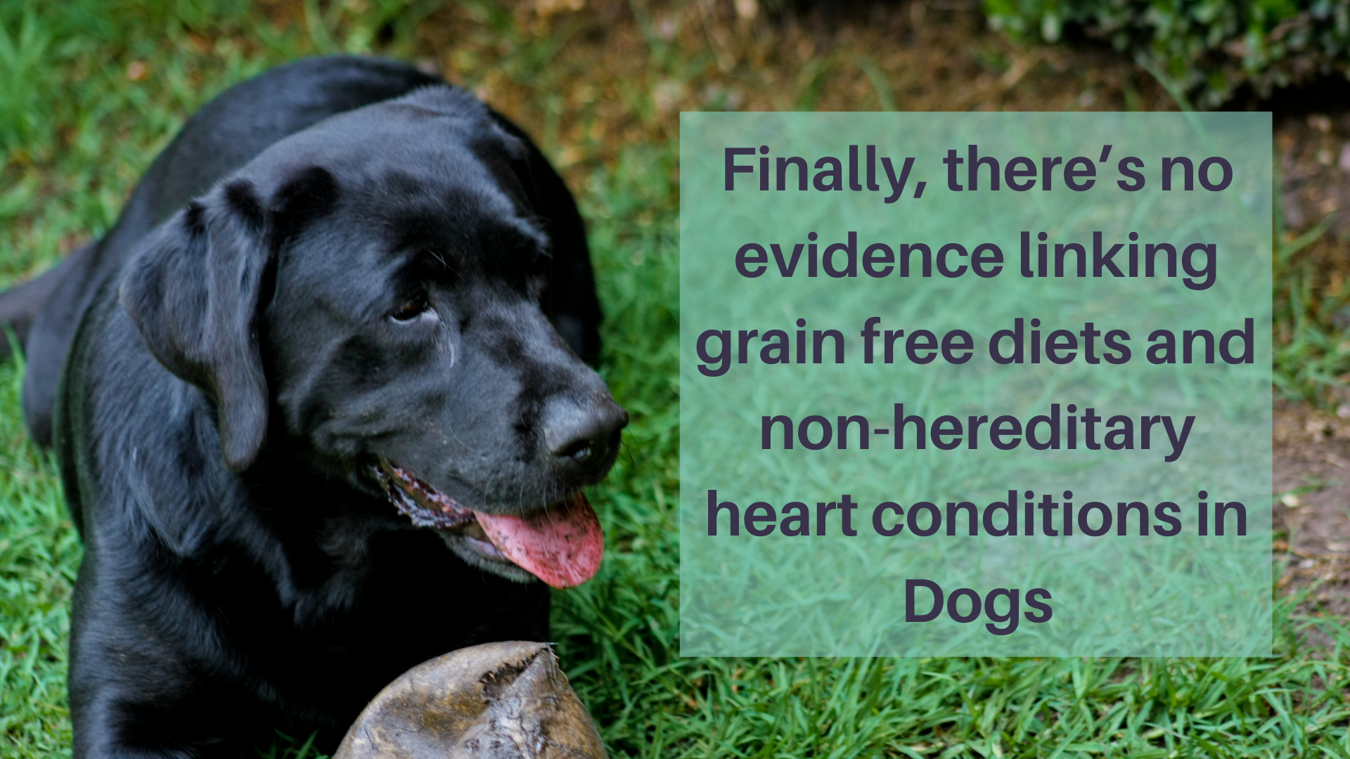 Finally, There's No Evidence Linking Grain-Free Diets And Non-Hereditary Heart Conditions In Dogs